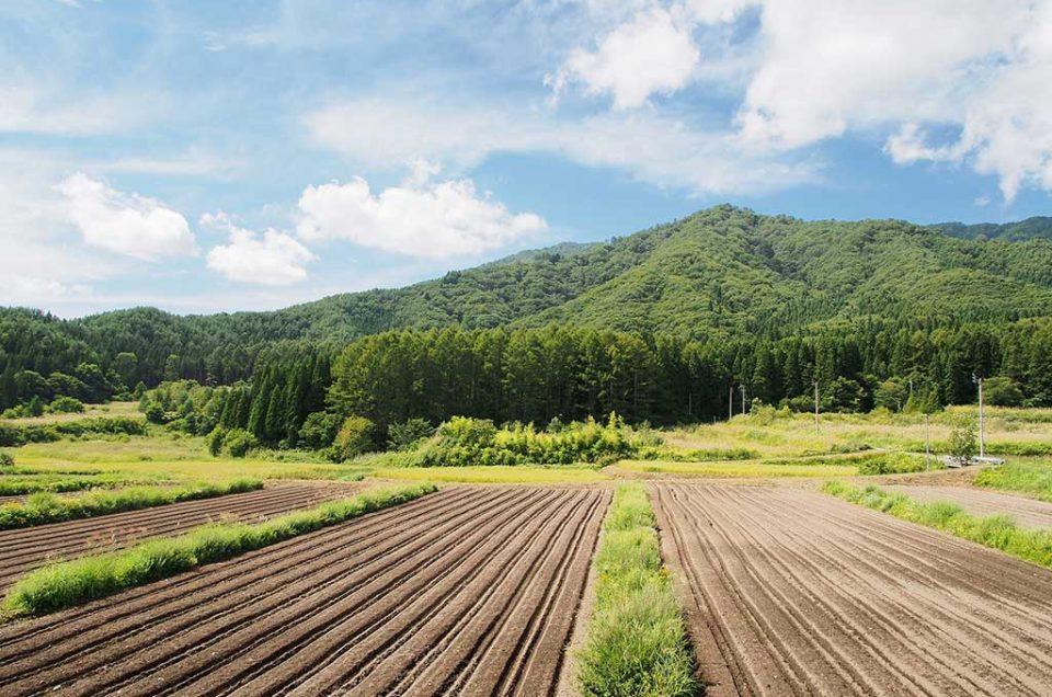 Experiência rural em uma fazenda de Nagano
