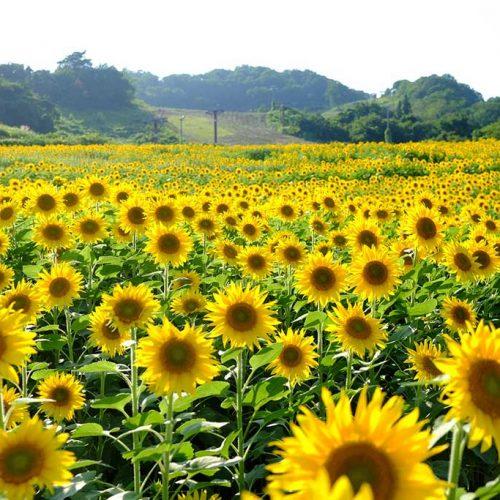 O melhor de Honshu e Hokkaido