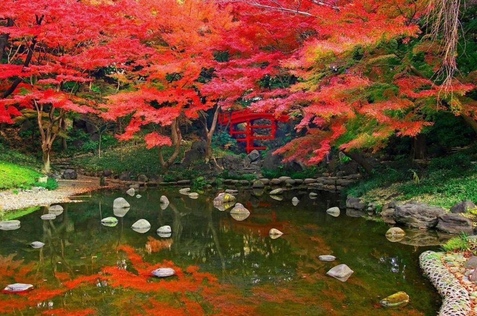 Tokyo Koishikawa Korakuen Garden