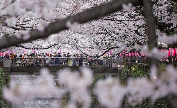 ¿Cuál es la mejor temporada para visitar Japón?