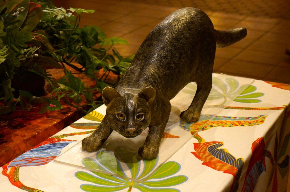 O gato selvagem yamenko do Iriomote