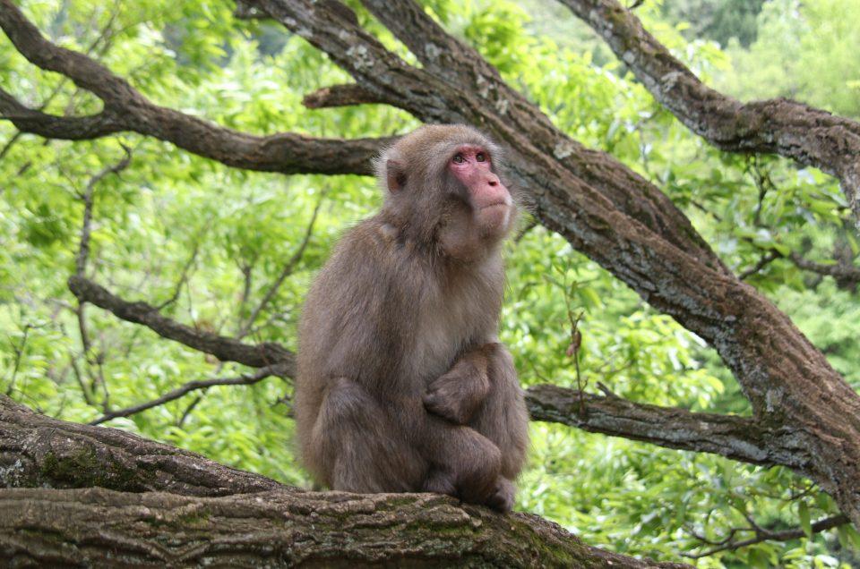 Parque de macaco Iwatayama