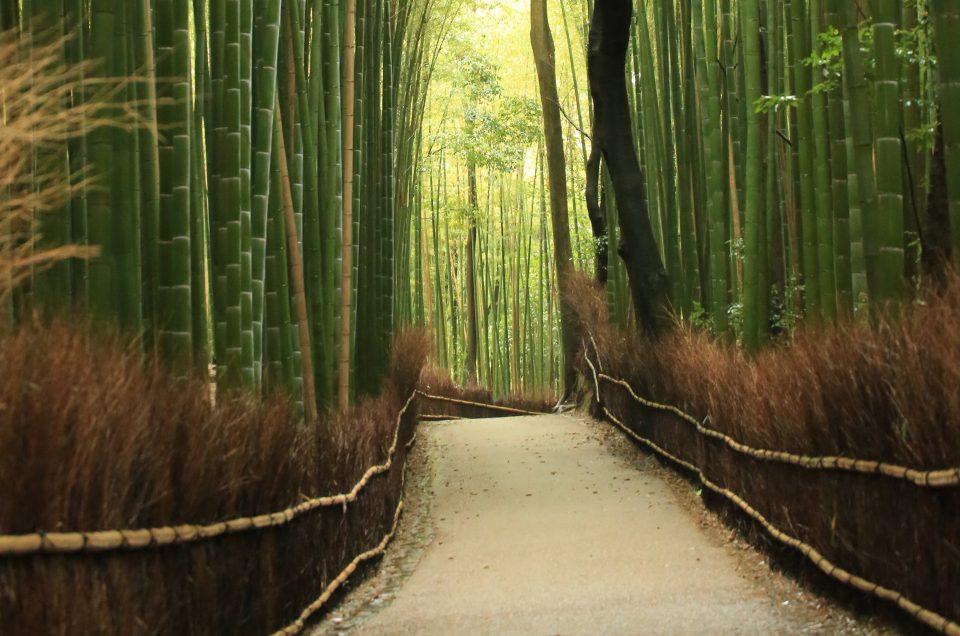 Bosques de bambu