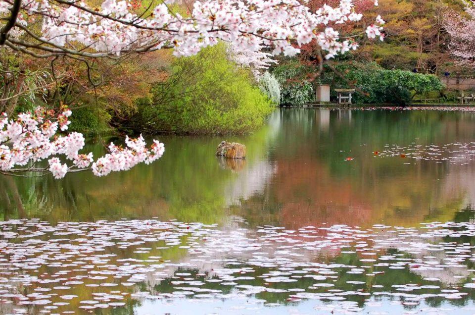 Tour do Jardim Secreto de Kyoto