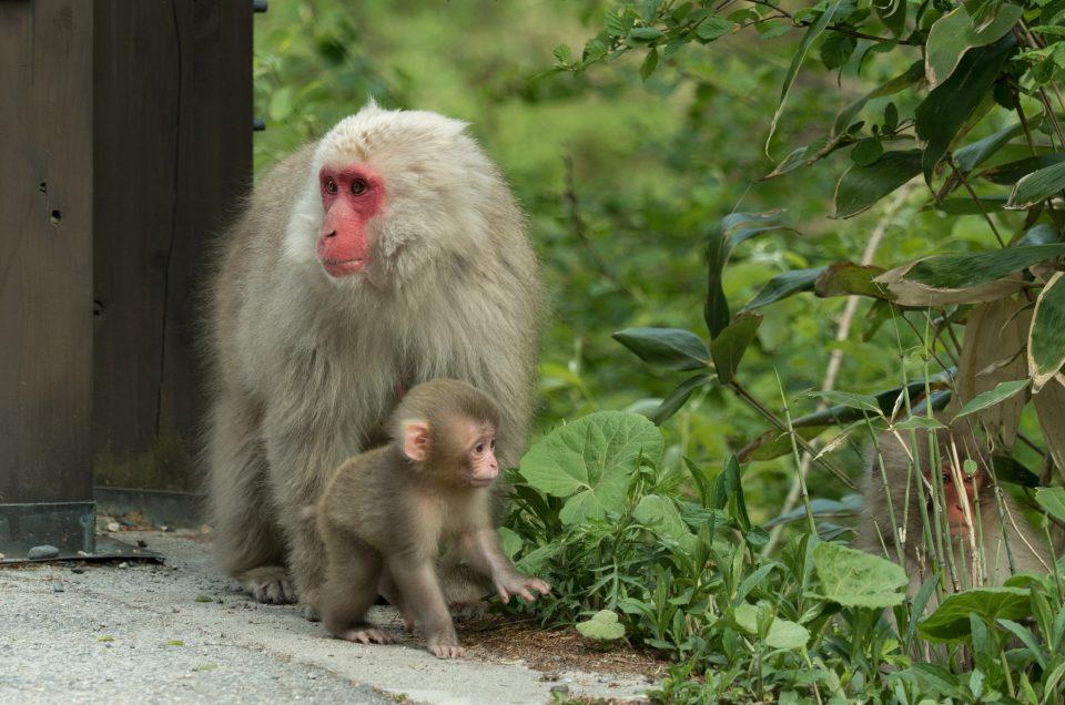 Encontros com os macacos