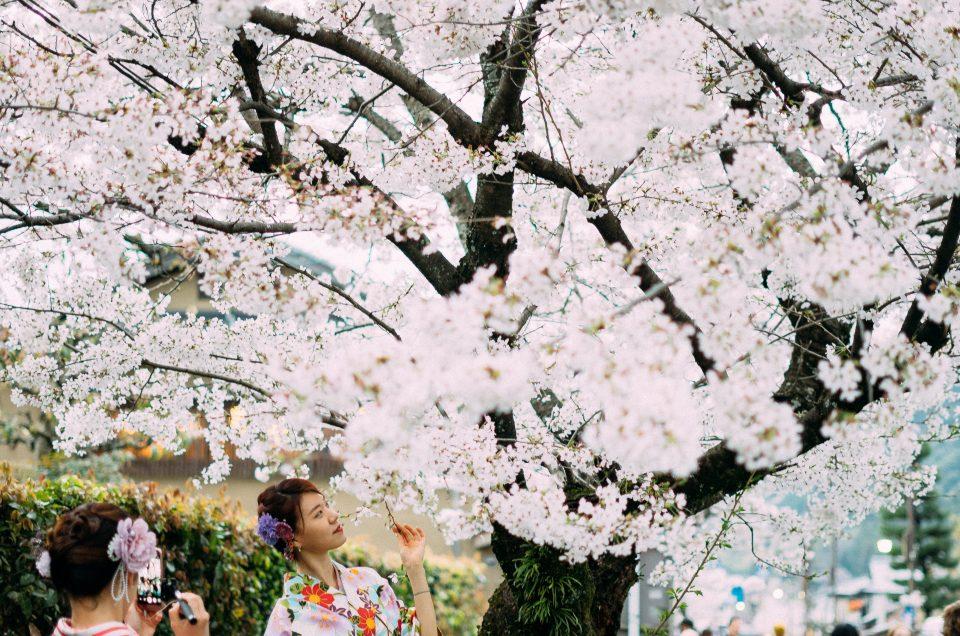 De baixo das cerejeiras no Japão